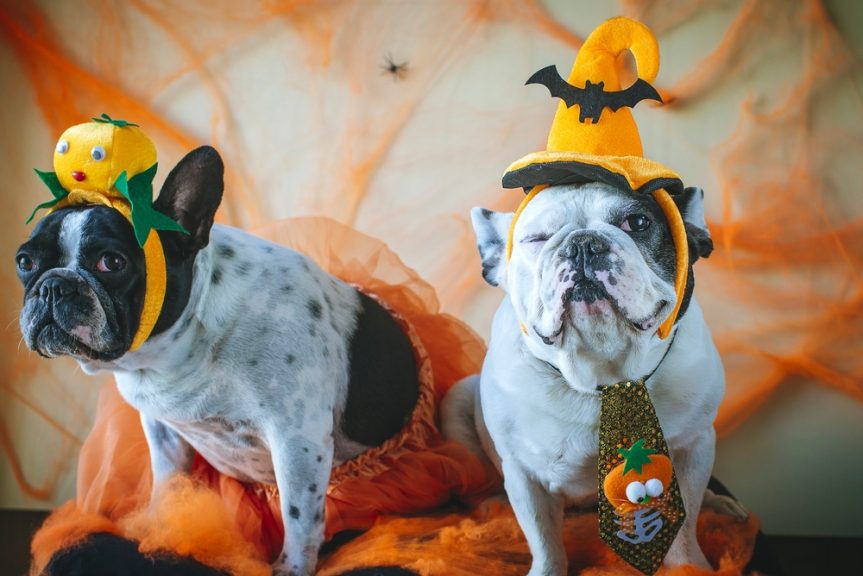 5 Top Dog Tips for Halloween