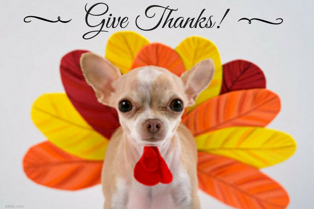 Top 5 Reasons to Be Thankful for Your Dog