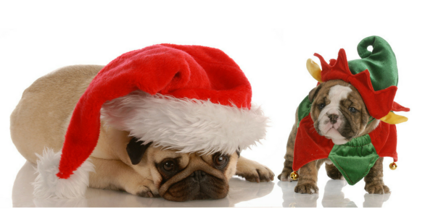 5 Tips for Celebrating the Holidays with Your Dog