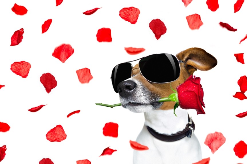 5 Ways to Spend Valentine's Day With Your Dog