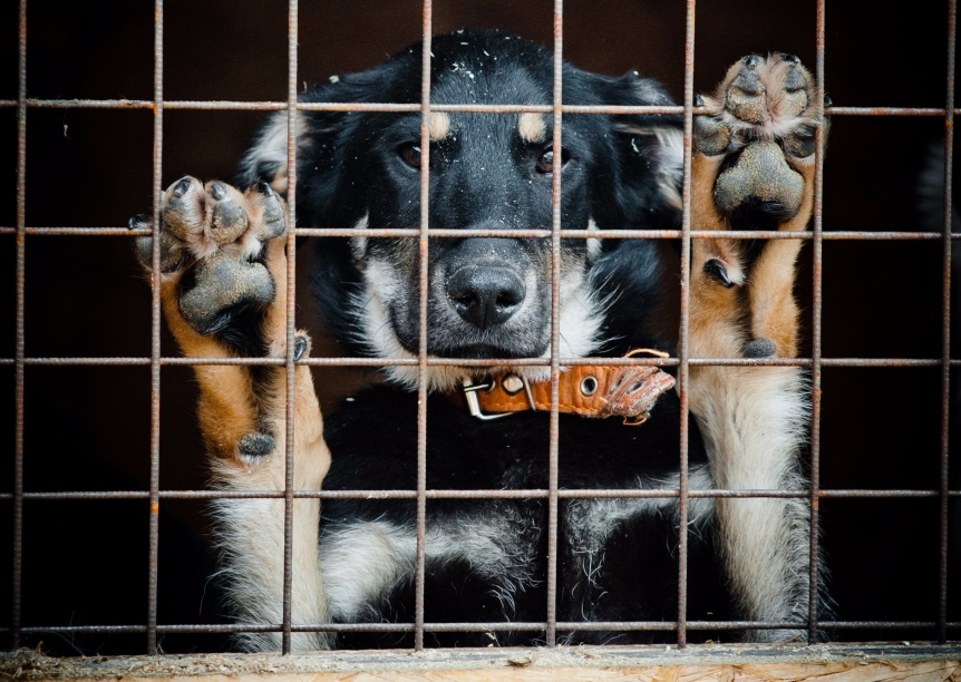 Adopt-A-Shelter-Dog Month