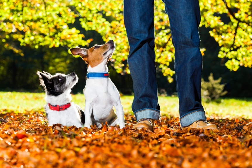 Top 5 Reasons Your Dog Is Thankful for YOU
