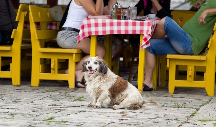 5 Valentine's Day Date Spots for You & Your Dog