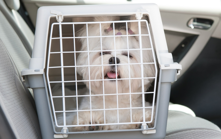 Dog safe in the car