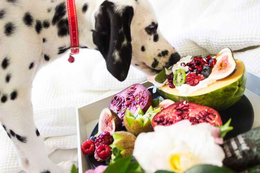 Why You Should Feed Your Dog An All-Natural Diet