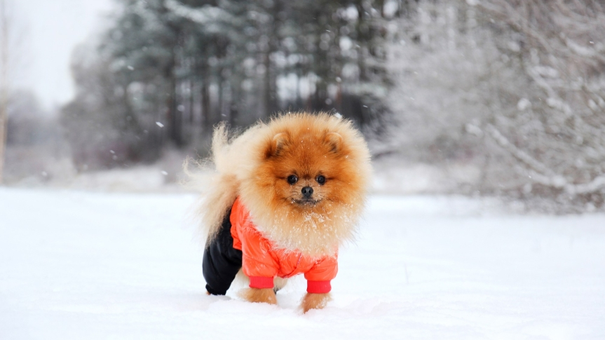 The 5 Pet Winter Safety Tips You NEED ToKnow!